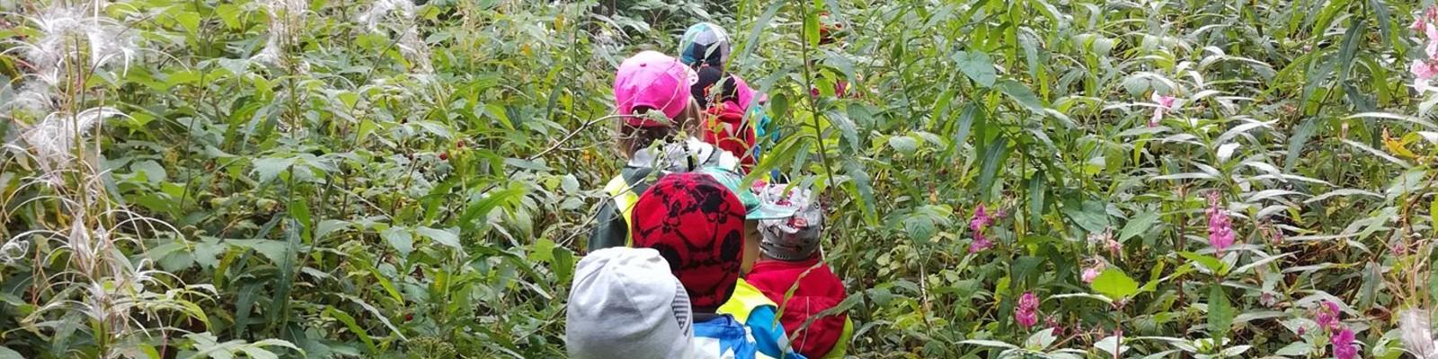 seikkailu metsässä (1)